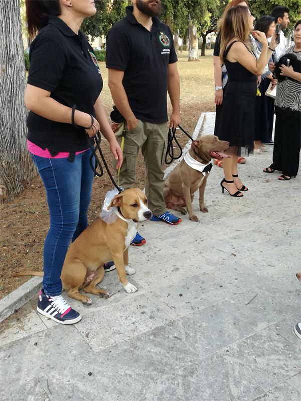 Salento Pet Food Negozi Per Animali Negozi Per Animali